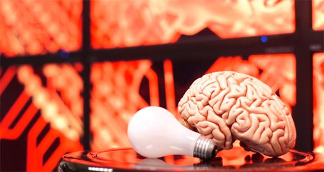 human-brain