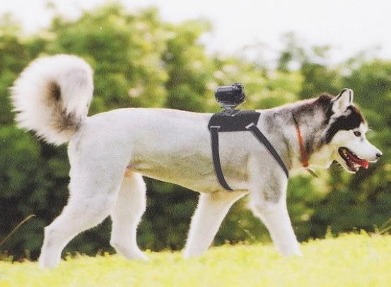 Видеокамера для собаки